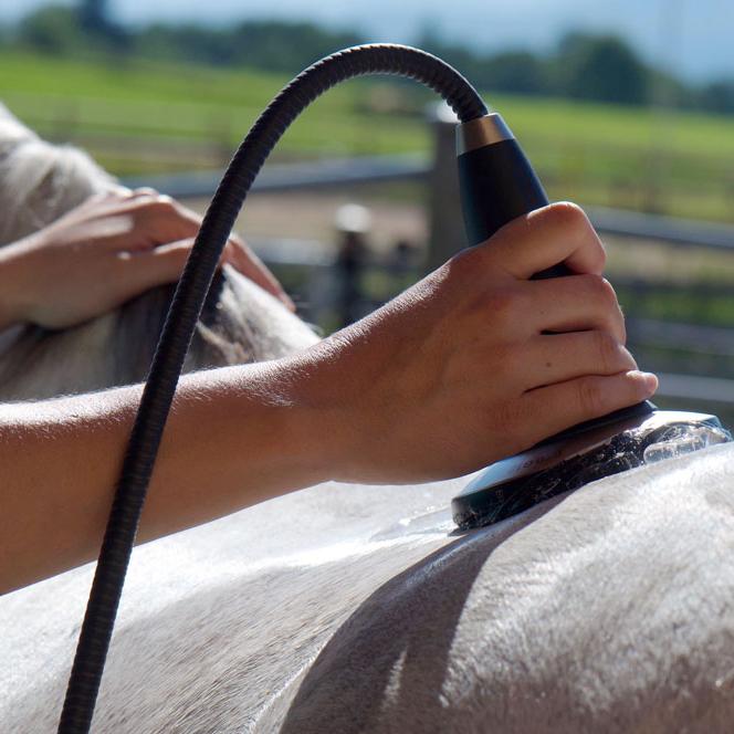Stoßwellentherapie Pferd